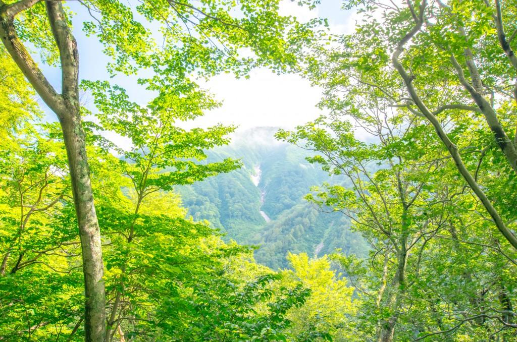 丸紅新電力の評判・口コミ – 再生可能エネで自然保護を支えるプラン